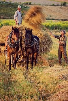 Working the farm. Country Charm, Country Life, Country Living, Country Roads, Esprit Country, Fields Of Gold, Country Scenes, Farms Living, Vintage Farm