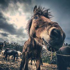 Koníci #horse #horses #icelandair #icelandhorse #cloud #cloudyday #ontheroad #island #iceland #instagram #travelgram #travel #explore #nature #lovenature #roundtrip #500px #vsco #from #ostrava #ostravacity #janjasiok