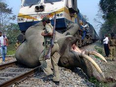 Trem perde o controle e atropela elefante na Índia