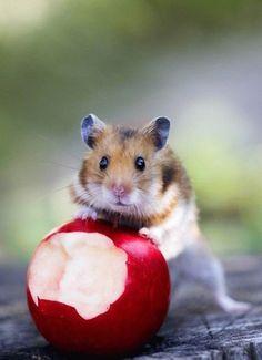 I Do not Eat The Apple