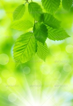 Realistic Graphic DOWNLOAD (.ai, .psd) :: http://vector-graphic.de/pinterest-itmid-1007064795i.html ... green leaves ...  background, beautiful, beauty, clean, condition, forest, fresh, garden, green, healthy, leaves, maintained, nature, pattern, spring, summer, texture, tree  ... Realistic Photo Graphic Print Obejct Business Web Elements Illustration Design Templates ... DOWNLOAD :: http://vector-graphic.de/pinterest-itmid-1007064795i.html