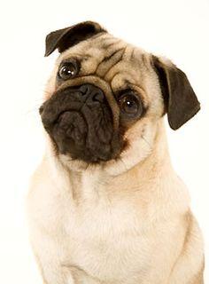 Pug Carlin