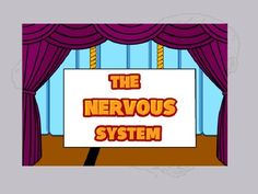All about the nervous system - info, activities, videos, and worksheets!