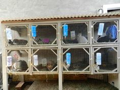 Rabbit Hutch Plans For Breeding                              …