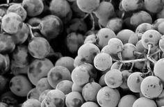 Bodegas Emilio Moro, vinos de la Ribera del Duero y enoturismo Emilio, Wine, Wine Cellars