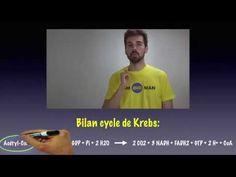 ▶ Cours de biochimie: cycle de Krebs - YouTube