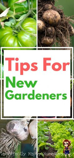 Tips for New Gardener Success - avoid the mistakes and pitfalls so you'll have a harvest in no time!