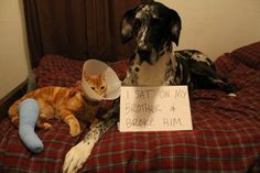 "Best dog shaming picture..It says ""I sat on my brother and broke him"" lol"