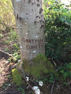 Top Funny Quotes murielio: ofeliathemoth: greater-than-the-sword: Found this near my house Yes please where the FUCK are you living Soft Grunge, Between Two Worlds, The Adventure Zone, Dipper Pines, Mothman, Southern Gothic, Ghost Hunting, Conspiracy, Goblin