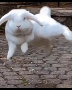 Funny Animal Jokes, Cute Funny Animals, Funny Animal Pictures, Animal Memes, Funny Dogs, Cute Cats, Baby Animals Super Cute, Cute Baby Bunnies, Funny Bunnies