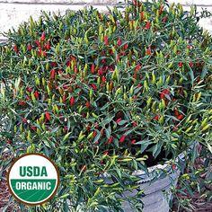 Chinese Ornamental Organic Pepper Seed Savers Exchange
