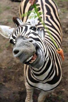 Carrot for the pretty zebra?