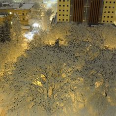 Thousands of Birds Photographed Atop Snow-Laden Trees in Downtown Portland, Oregon