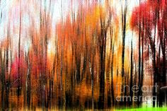 Fall Trees Of Bucks County by Tom Gari Gallery-Three-Photography