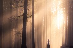 """Spirit of the Forest - My good friend <a href=""""https://www.flickr.com/photos/likedaffodils/"""">Sarah Ann Loreth</a> (pictured here) is visiting for a few weeks.  The other day we went into the forest at the edge of the fog where all the sunbeams were shining through the trees...  It was absolutely one of the most magical days I've experienced.   ___________________________ <a href=""""http://www.elizabethgadd.com"""">Website</a>   <a…"""