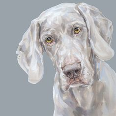 Via Etsy: Weimaraner Dog Art Print - Ltd ed. Signed No.58.
