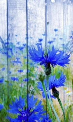 If I had my fence painted like this, I wouldn't have to worry about growing blue flowered plants!who do I know that … - All For Garden Yard Art, Backyard Fences, Fence Garden, Farm Fence, Fence Plants, Pool Fence, Diy Garden, Garden Landscaping, Pallet Art