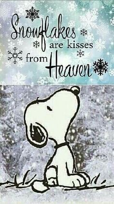 Snoopy - Snowflakes are kisses from heaven Snoopy Love, Charlie Brown And Snoopy, Snoopy And Woodstock, Charlie Brown Quotes, Charlie Brown Christmas, Great Quotes, Me Quotes, Funny Quotes, Inspirational Quotes