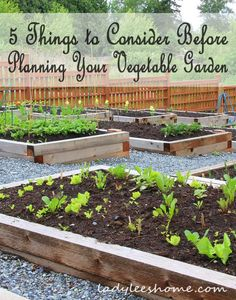 Here are five things you should consider before planning your vegetable garden and ordering seeds.