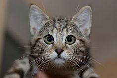 Poteussolandia: 21 Gatinhos Vesgos