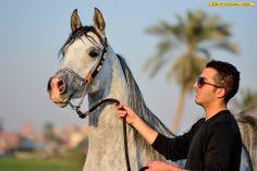 #horses Arabian stallion Arabian Stallions, Arabian Horses, Animals, Horses, Country, Animales, Animaux, Animal, Animais