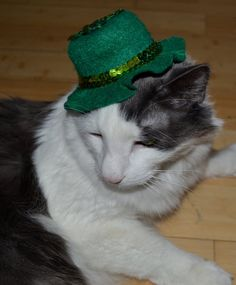 Hats for Cats for St Pats!