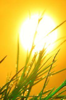 #Homeopathy for #Sunstroke   #heatstroke #summer #natural #wholehealthmedicine #alternative