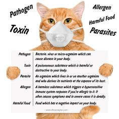 What is the difference between pathogens, toxins, pathogens and allergens? Health Infographics, Microorganisms, Posts, Food, Messages, Essen, Meals, Yemek, Eten