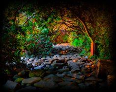 Tel Dan Nature Reserve, Galilee, Israel