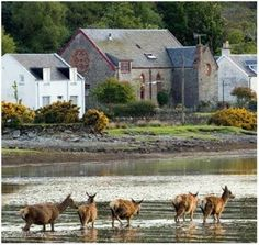 Lochranza · Isle of Arran Glasgow Scotland, Scotland Travel, Scotland Trip, Animal Of Scotland, Isle Of Arran, Scottish Castles, Countries Of The World, Travel Pictures, Home Art