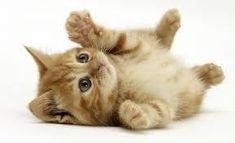 Resultado de imagen para gatitos bebes tiernos