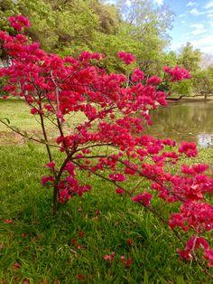 Sta Rita en el jardín Botánico .Asunción -Paraguay