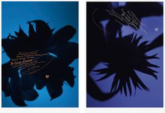 """B-blue flowers 2012"""