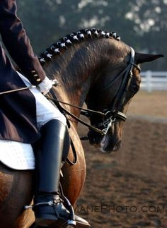 The elegance of equestrian sports is no secret, but when you look closely at the finer details of dressage you see the magnificence of horse and rider performing in harmony. Horse Mane, Horse Girl, Andalusian Horse, Friesian Horse, Arabian Horses, All The Pretty Horses, Beautiful Horses, Horse Braiding, Dressage Horses
