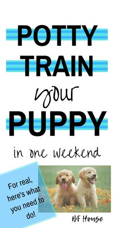 Puppy Potty Training: 1 Weekend Lesson – BF House Puppy Schedule, New Puppy Checklist, Puppy Training Schedule, Training Your Puppy, Dog Training Tips, Potty Training Puppies, Brain Training, Potty Training Puppy Apartment, Training School