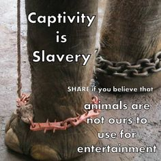 Captivity is slavery!https://www.facebook.com/therainforestsite/photos/a.10150635514862688.387498.6020882687/10152376760152688/?type=1&theater