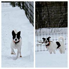 Good job, Jack!  That's what we call a successful hike! #evasplaypupsPA #dogs #dogcamp #dogboarding #doggyvacays #doggievacays #hikingdogs #happytails #smilingdogs #dogsinnature #runfree #runlikethewind #blackandwhites #handsomeman #jackpandadog #wintergames #winterwonderland #sweetdreams #gopro #dogsoncamera #bordercolliesofinstagram #dogsofinstagram #instapup #badassbk #adoptdontshop #rescuedog #endlessmountains #mountpleasant #PA #pennsylvania