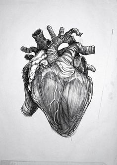 Anatomical heart sketch