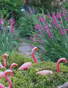 I love flamingos in the garden.  Takes me back to my childhood in Florida. Retro Cool.