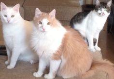 My Tomcats
