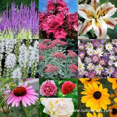 Plant these in one bed for blooms Spring through Fall! For Early season blooms: Peony and Anemone  For MID season blooms: Coneflower, Liatris, Phlox, Oriental Lily  For LATE Season blooms: Rudebeckia, Sedum