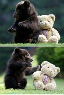 Bear and bear!