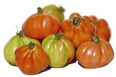 Green Galletti: Il Pomodoro di Albenga: una questione di cuore