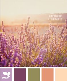 lavender fields. Minus the light peach - with lots of white...and little color pops. Bathroom
