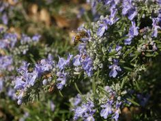 Best Cat Repellent Plants If cats are a nuisance in your garden, consider buying some plants that are known cat repellents. Much as cats love catnip, there are some scents which they hate, and scie...