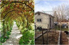 12 Amazing Living Structures You Can Create! - Grape Arbor: