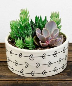 Cactus Arrangements - Love plants but not good at taking care of them? Lucky for you, cactus arrangements are back in style. Succulent Bowls, Succulent Arrangements, Succulent Terrarium, Cacti And Succulents, Planting Succulents, Planting Flowers, Cacti Garden, Succulent Ideas, Succulent Containers