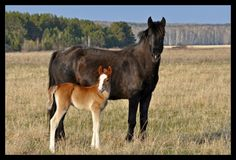 Mare and Foal by Blue_Bird. For the Horse Lovers :)