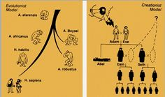 CONDUCTA INICIAL :     ¿Cuál es el origen del ser      humano? ¿Cómo se originó el ser humano?   ¿Qué pruebas hay para la      respue...