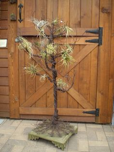 Display Ideas -- Wire Tree.  Air plants?